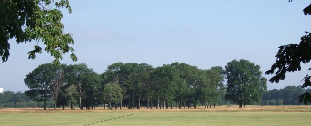 Clump of trees in Wanstead Flats