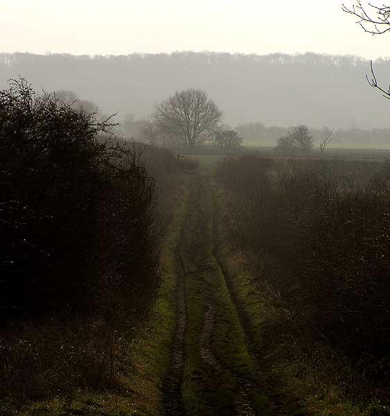 Green Lane, Bradmore