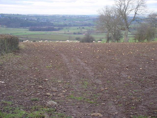 Farmland at Celleron