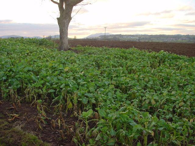Farmland at Tirril