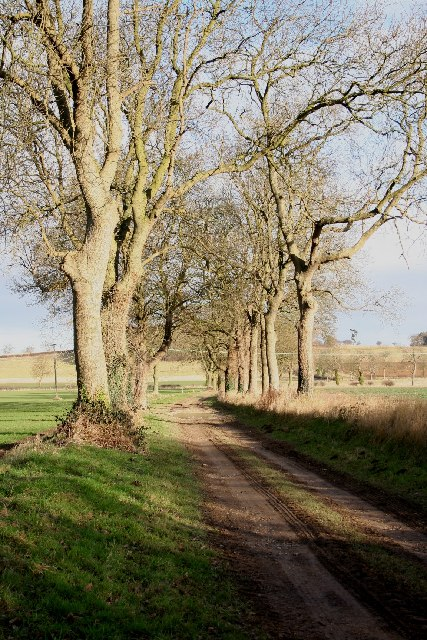 Path to Brinkhill