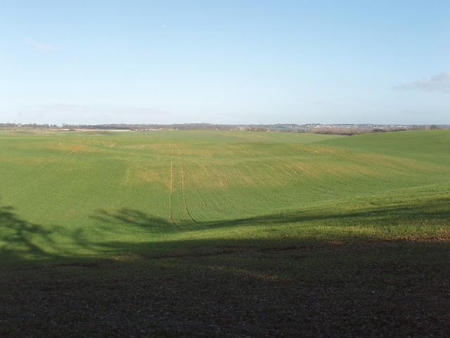 Grassland near Denham