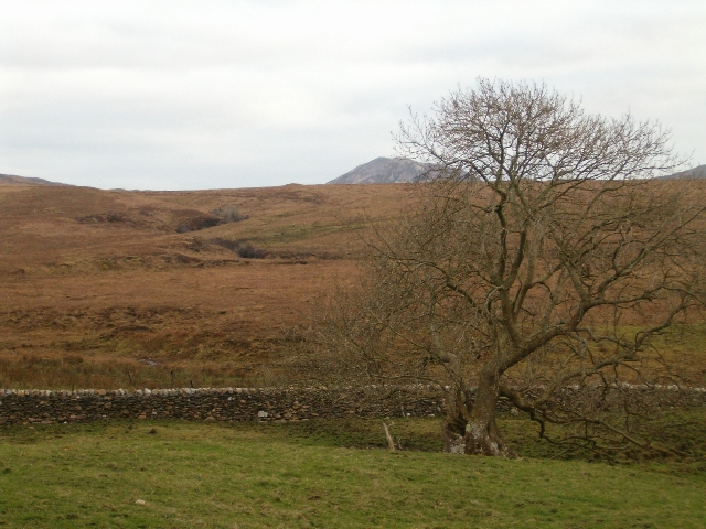 Edge of the moorland
