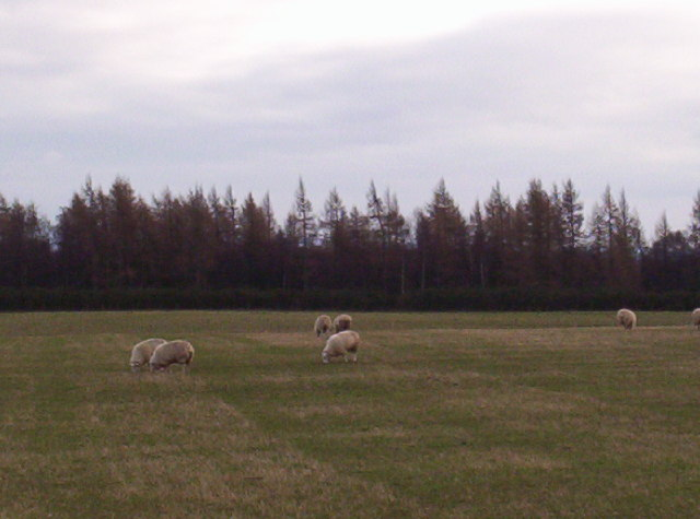 View of Blair Muir and Some Lovely Sheep!!!!!!!!!!