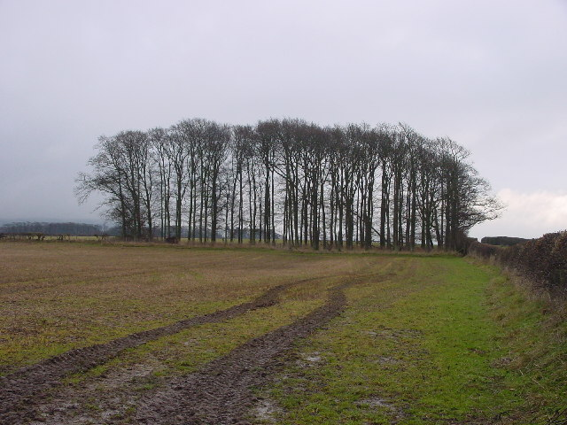 Copse in Farmland
