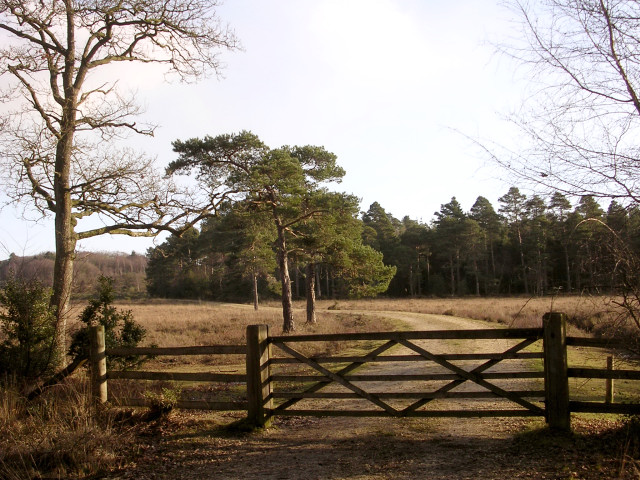 Leaving the King's Hat Inclosure, New Forest