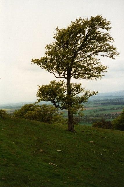 Hill of Finavon