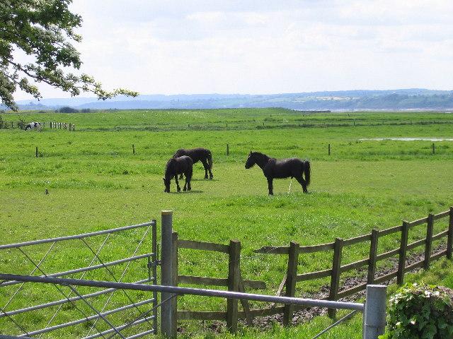 Frampton-on-Severn meadow