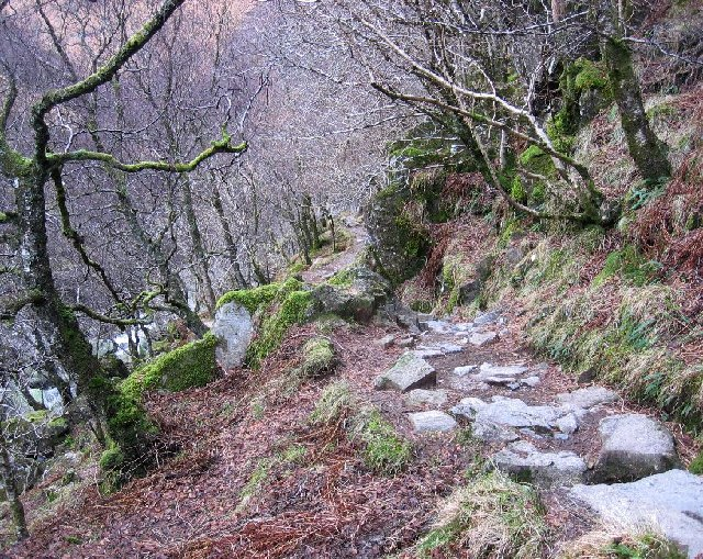 Caledonian Forest Walk