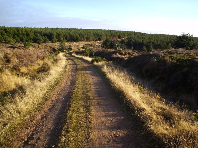 A Forest Road on Cnoc an t- Sabhail