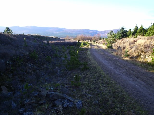 A Forestry Road on Cnoc an t-Sabhail
