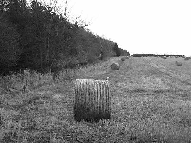 Round bales and strip.