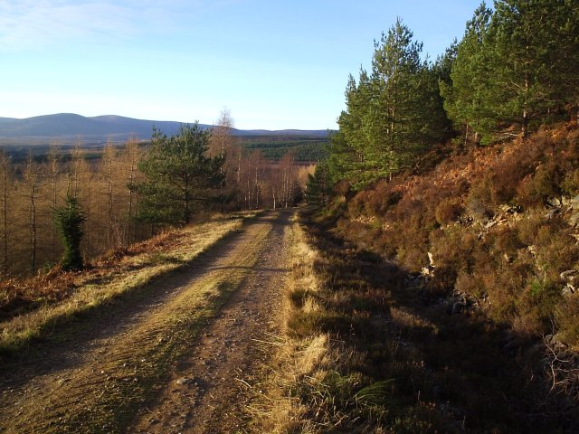 On the Forestry Road back down to Strathrory