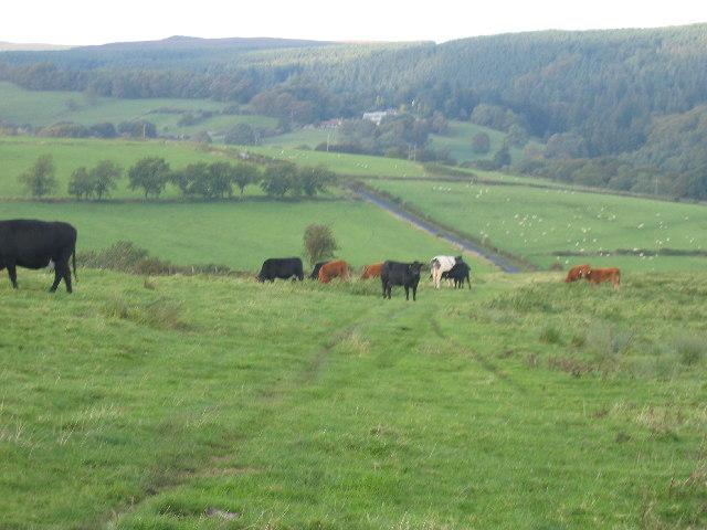Garleigh Moor towards  looking towards Cragside