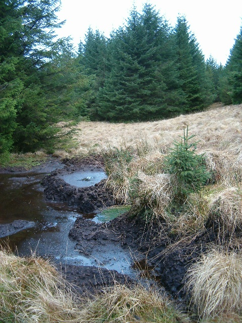 Peat pool in the forest.