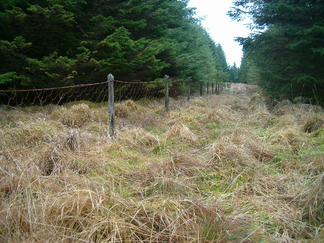 Boundary fence in the forest