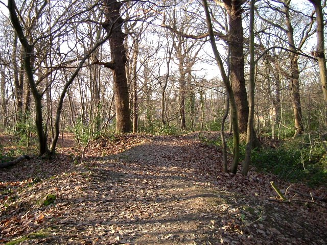 West Wood path, Hadleigh