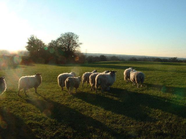Farmland near Bilsborrow