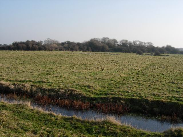 Ditch and Field, Thorney Island