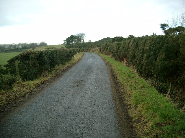 Gorse hedges near Cronan farm
