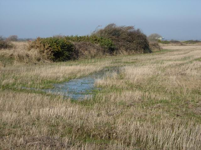 Field corner, Thorney Island