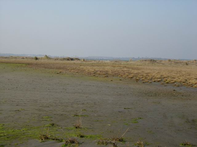 Developing Saltmarsh