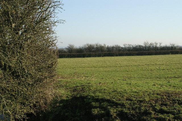 Field Allerton Moor