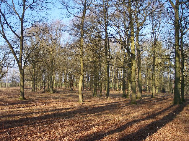 Tranquillity of a Copse in January Sunshine