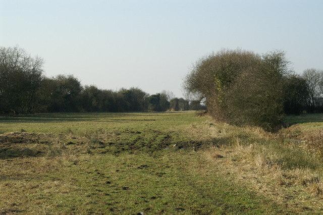 Field Binham Moor