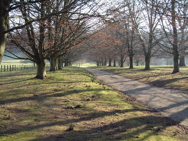 Avenue in Dewlish Park