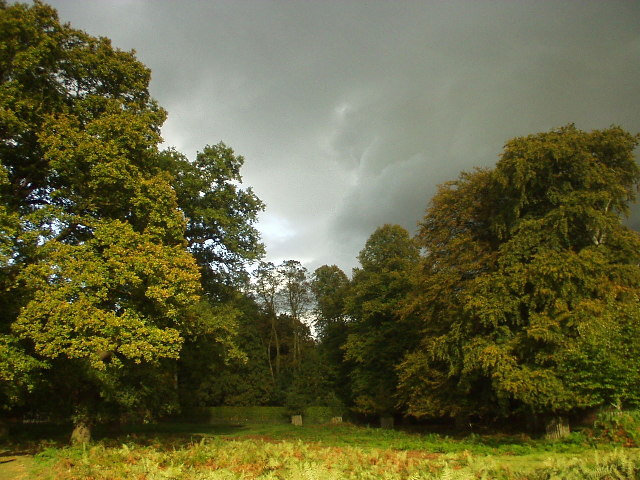 Beech Trees at Dunham Park