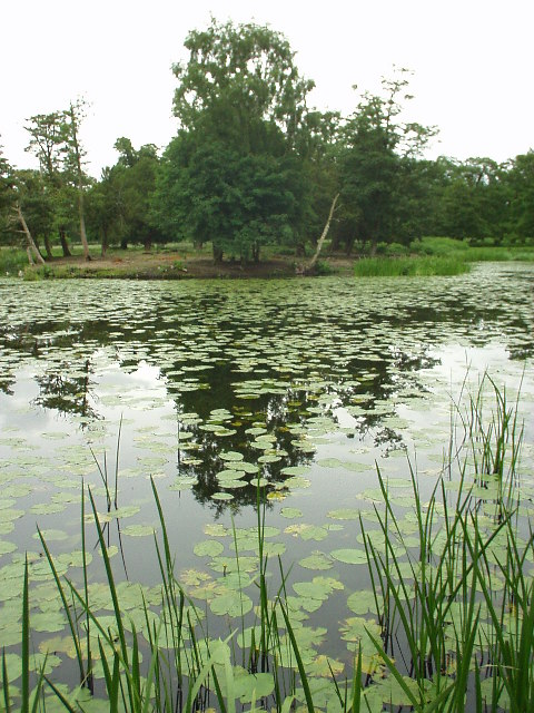 Island Pool, Dunham Massey