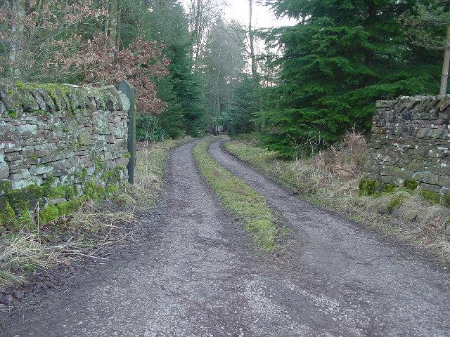 Forest Entrance