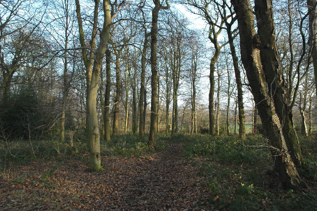 Woodland near Delf House, SE of Hoylandswaine