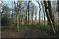 SE2704 : Woodland near Delf House, SE of Hoylandswaine by Chris Yeates