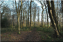 SE2704 : Woodland near Delf House, SE of Hoylandswaine by Chris Yeates