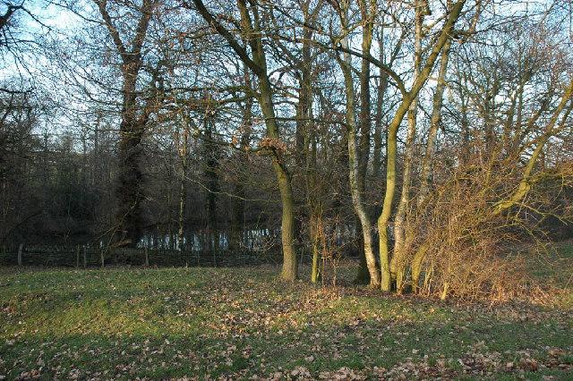 Through the trees to Blacker Dam