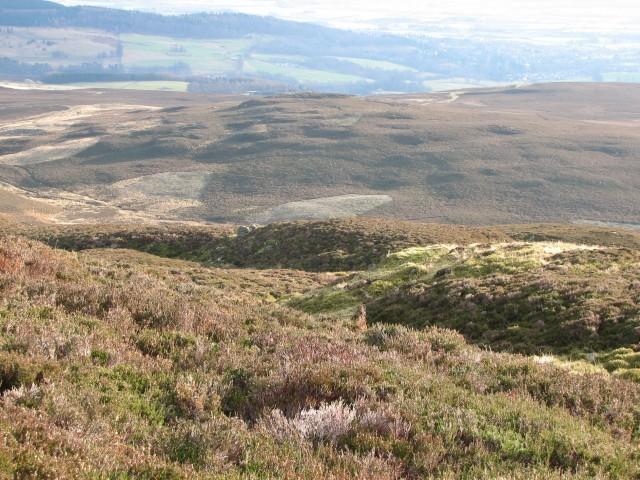 Heather-clad hillside