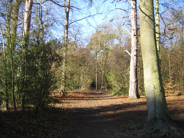 Chipperfield Common