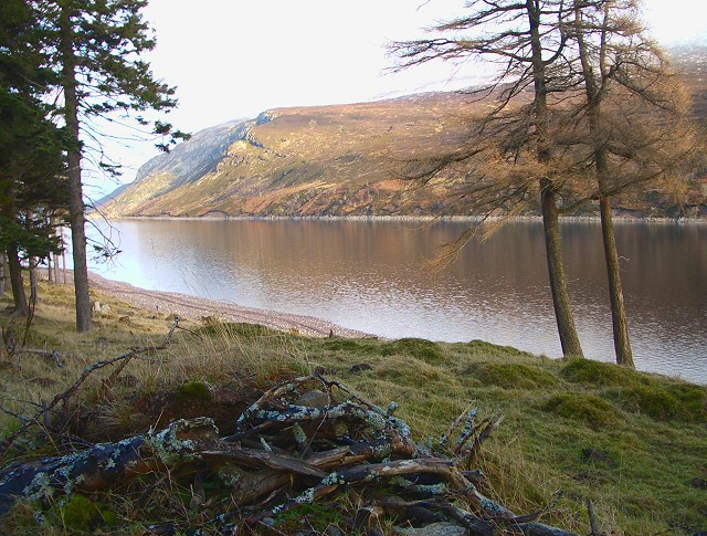 Pine and Larch at Loch Ericht