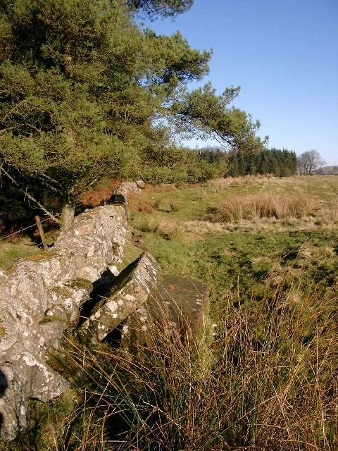Carved stones by the track to Watstone Hill