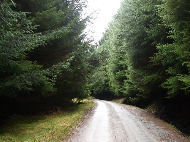 Loch Ericht Forest