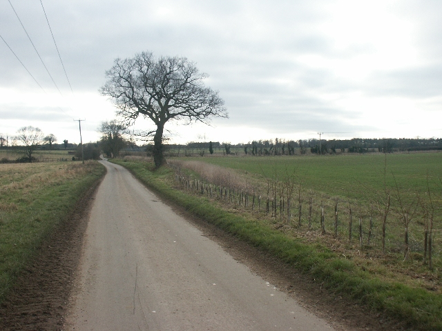 Lane and tree, near Swainsthorpe