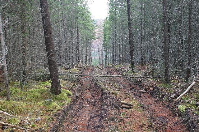 Bulldozer track on Scaut Hill