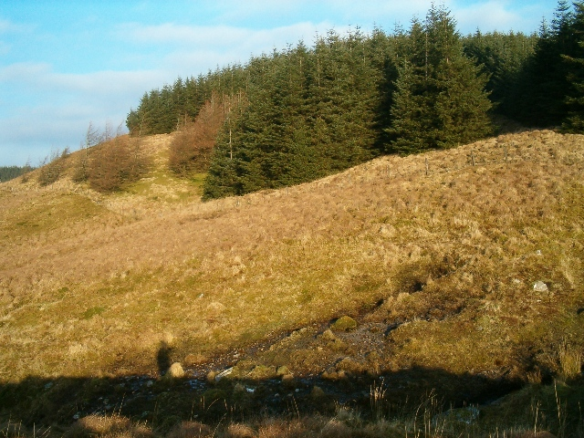 The edge of Eredine Forest from Ederline estate land