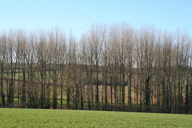 Silverton: a belt of trees near Old Heazille