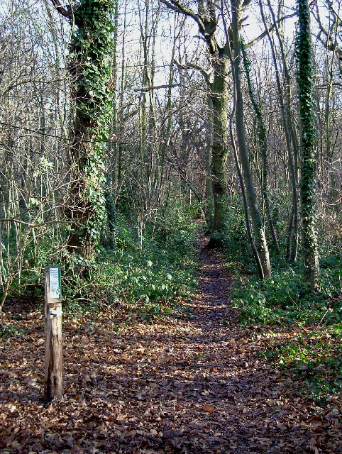 Waymarked path in Pound Wood