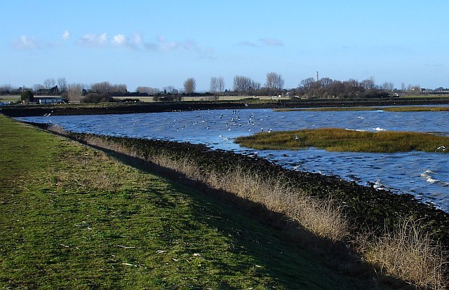 Salt marsh near Lower Halstow