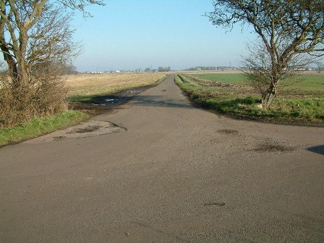 Lane between the trees