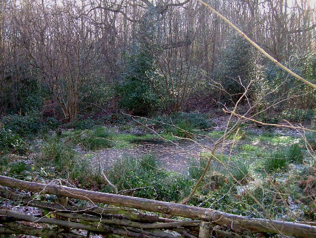 Digby's Dell Pound Wood